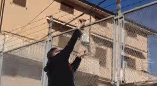 Klaus Davi spezza il filo spinato della villa del boss della 'Ndrangheta: «Lo Stato intervenga» Video