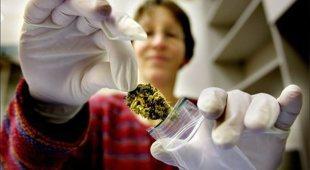 Cannabis medica, attenzione alle reazioni avverse: segnalati 20 casi in 6 mesi