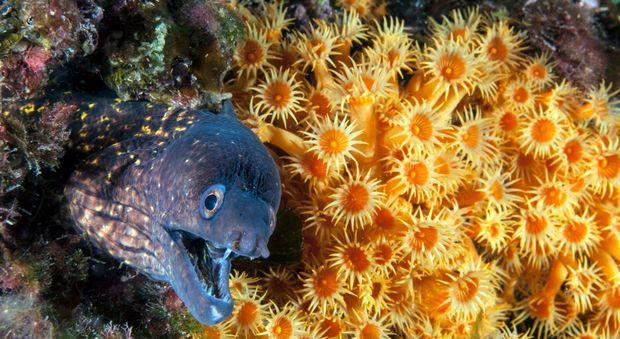 Punta Campanella, gli esperti: specie animali aumentate del 20 per cento