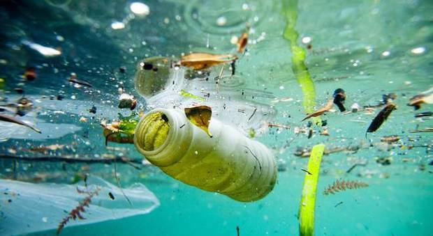 Plastiche e microplastiche, 90 specie a rischio nel Mediterraneo