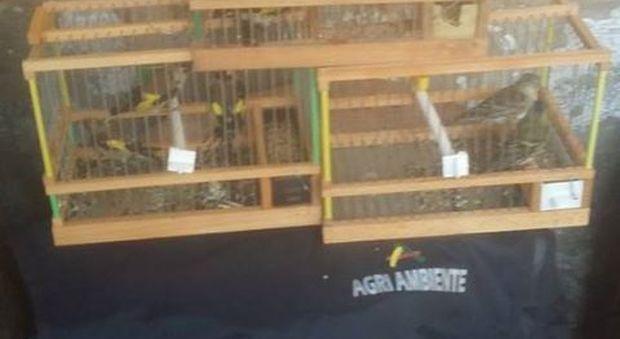 Napoli. Blitz delle guardie zoofile nel mercato abusivo di Gianturco, liberati cardellini in gabbia