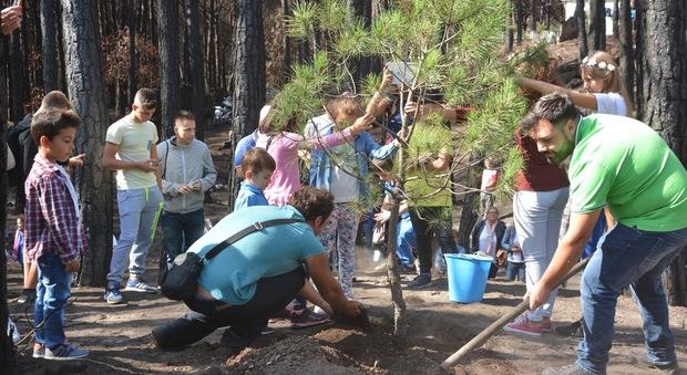 Piantato un pino sul Vesuvio:  nasce l'associazione Primaurora