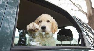 Lascia tre cani chiusi in auto sotto il sole, ottantenne denunciato a Tarquinia