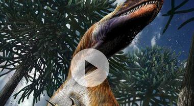 Perché Carbon-14 non è usato per la datazione di ossa di dinosauro