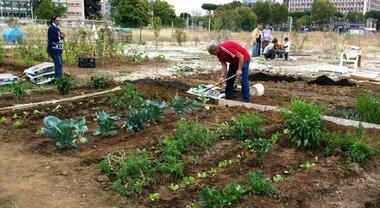 Napoli: «Il giardino della Ferrovia», a Pianura uno spazio per realizzare  orti urbani - Il Mattino.it
