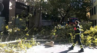 Maltempo a Napoli, albero cade sul terrazzo al Vomero: chiusa via Cimarosa  - Il Mattino.it