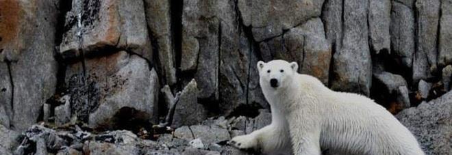 Stati Uniti, salvi orsi e caribù: Biden sospende perforazioni petrolifere nel parco dell'Artico
