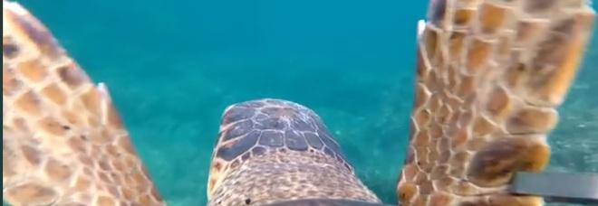 Le emozionanti immagini riprese dalla telecamera sul carapace della tartaruga (Video di Filippo Armonio pubbl su Fb)