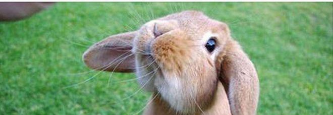 Vietare In Italia La Carne Di Coniglio Due Anni Di Carcere Ai