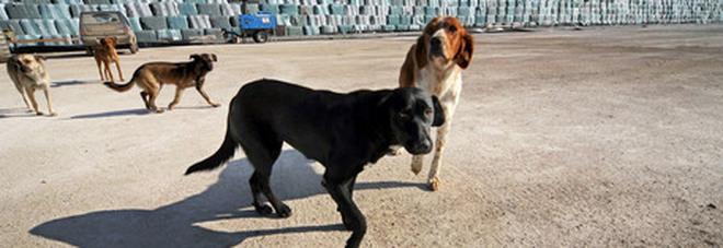 Uccide il cane a fucilate e scappa. Un particolare incastra l'uomo: denunciato