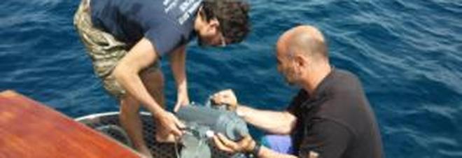 Punta Campanella, ecco l'App che segnala sversamenti in mare