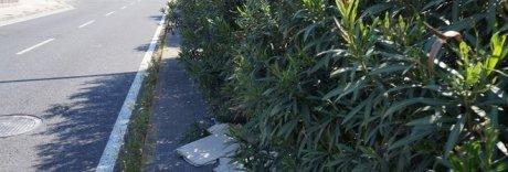 Napoli, verde negato: in abbandono anche le aiuole «in adozione»