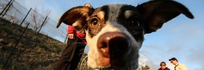 L'Accademia della Crusca smentisce: «Non si può dire scendi il cane»