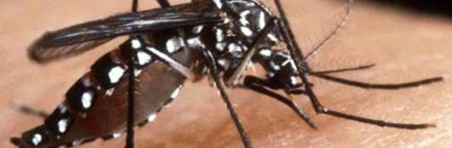 Zanzara tigre, nei prossimi giorni rischio invasione a Napoli e Caserta