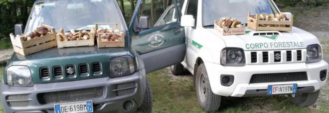 Raccolta funghi senza tesserino: multe e sequestri in Cilento