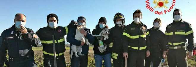 I cagnolini salvati in braccio ai padroni e i soccorritori