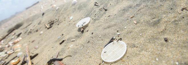 Alghe e bucce, il packaging green al posto della plastica: la rivoluzione in aumento di 154 miliardi dollari entro il 2028