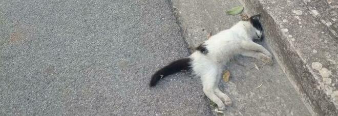 Galatina, minacce al direttore dell'ospedale: gatti morti nel giardino di casa. Scatta la denuncia: «Non so spiegarmi cosa stia accadendo»