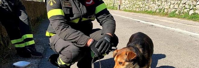 Cucciolo recuperato in un dirupo nel napoletano: cercasi adozione del cuore