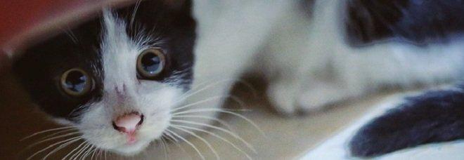 Settanta gatti maltrattati e rinchiusi in un appartamento: donna denunciata