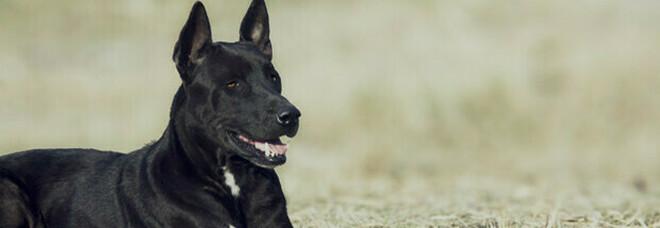 Eredità al cane, nel testamento esclude i figli: «Loro mi hanno deluso, lui mai»