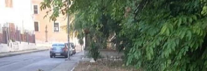 Benevento, aiuole e marciapiedi in centro «bonificati» dai volontari