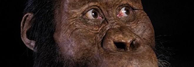 Realizzato in Italia il ritratto in 3D dell'antenato di Lucy, è un ominide di 4 milioni di anni fa