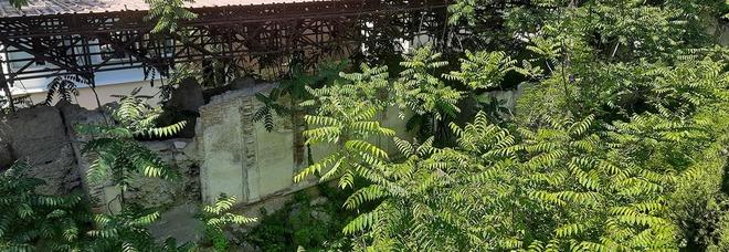Pozzuoli, la necropoli romana in abbandono diventa jungla