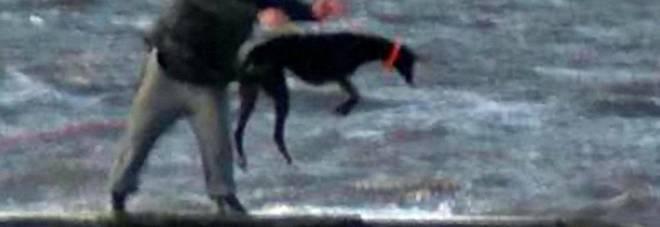 Regno Unito: cani costretti ad immergersi nell'acqua gelida e fatti riemergere con una corda, si cercano gli autori del folle gesto