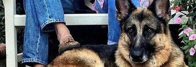 Biden annuncia la morta del suo cane Champ: «Mi mancherà»