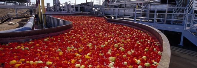 Pomodoro con pesticidi fuorilegge: è caccia ad altre partite infette
