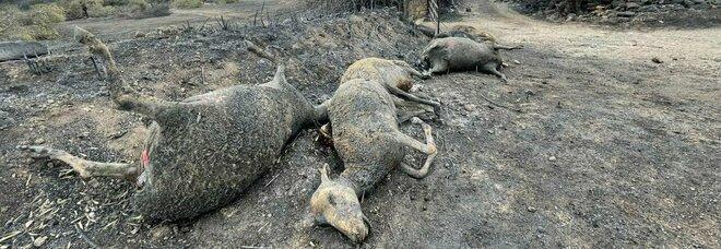 Sardegna in fiamme. Cuglieri, il paese che non esiste più. «Sono rimasti solo macerie e fumo»