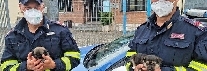 Agenti della polizia stradale salvano cuccioli che vagavano lungo l'autostrada