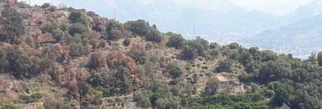 Fiamme a Maiori, preso il piromane: denunciato dai carabinieri forestali