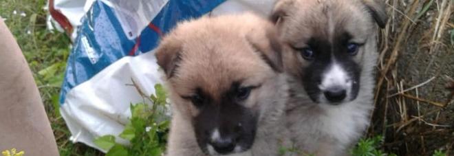 Cuccioli abbandonati in autostrada, l\u0027appello dei volontari «Serve cibo»