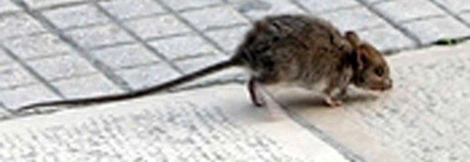 Salotto di corso Trieste a Caserta, qui il gran ballo dei topi