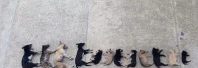 Strage di cani, 17 animali avvelenati in poche ore da bocconi avvelenati