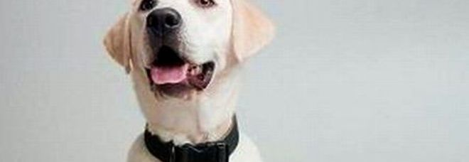 Dieci cibi che fanno male ai vostri cani ecco tutti gli - Alimenti che fanno andare in bagno ...