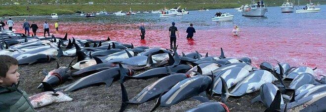 Migliaia di delfini trucidati alle Isole Faroe. Sea Shepherd: «È il più grande massacro degli ultimi anni»