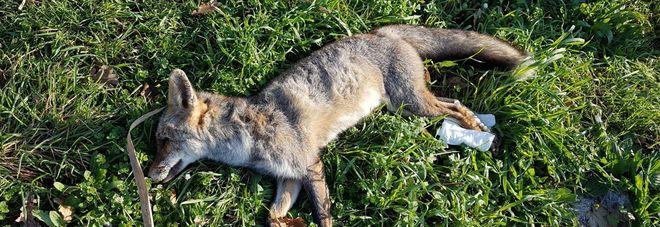 Chiusa la caccia, il bollettino è da guerriglia: 114 tra morti e feriti