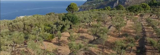 Con L'Oro di Capri l'isola azzurra è sempre più green, un docu-video sintetizza il lavoro dell'associazione
