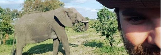 Elefante carica un ranger e lo trafigge con una zanna: l'uomo muore tra le braccia della fidanzata