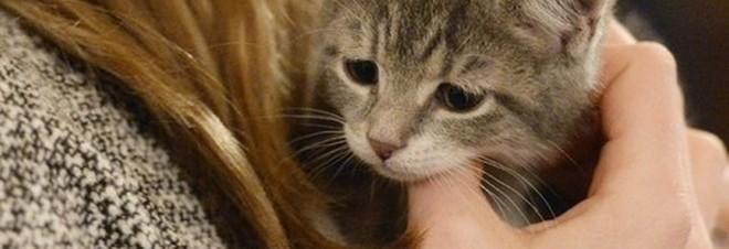 Sorpresa Il Gatto Protegge Il Bebè Neonati E Bambini Ad Alto