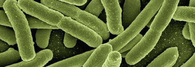 Scoperti batteri che non sono cambiati da 175 milioni di anni: potranno aiutare nella terapia genetica