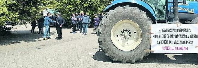 Sos brucellosi nel Casertano: «Fermate la strage delle bufale»