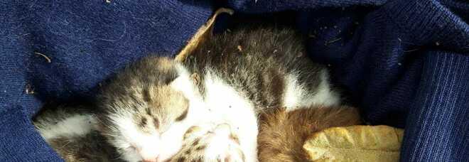Incastrati nelle frasche del liceo classico, i volontari salvano cuccioli e mamma gatta a Torre del Greco