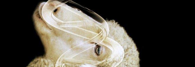 Pecora Dolly, i 25 anni del primo mammifero clonato. Tutte le tappe della ricerca