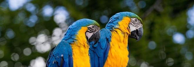 Chiede alla ex di restituirgli il pappagallo, il padre di lei gli punta contro il fucile
