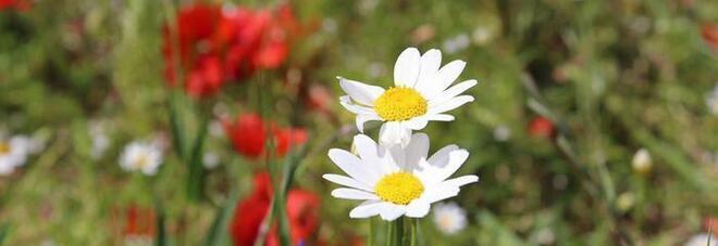 Equinozio di primavera oggi 20 marzo, cos'è e quando cade: l'inverno è ufficialmente finito
