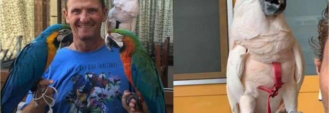 Vola via Jerry, l'amato pappagallo di Enzo Salvi. Il disperato appello dell'attore sui social. (immagini pubbl sulla pag Fb di Enzo Salvi)